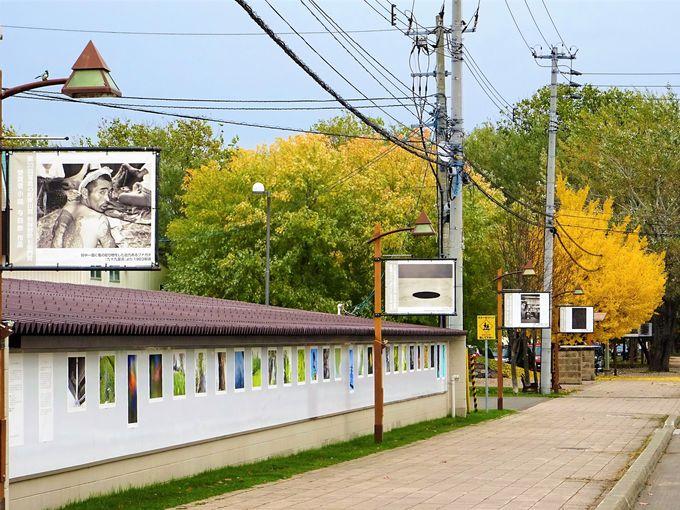 まずは写真の町、東川のフォトストリートを散策