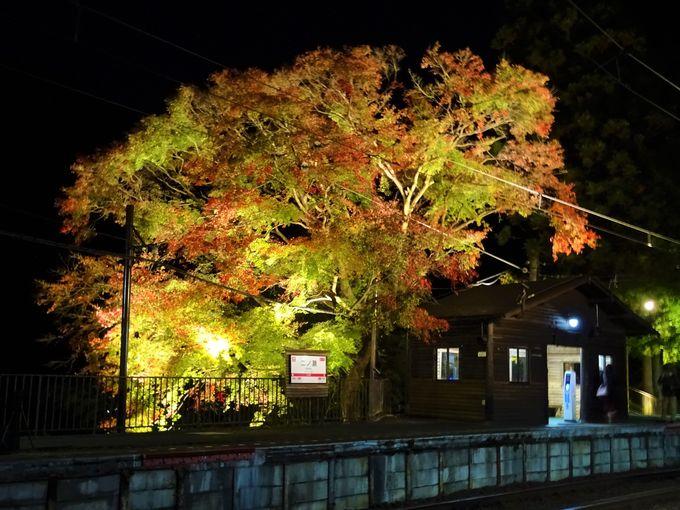 「貴船もみじ灯篭」に鞍馬寺、叡山電車沿線の紅葉みどころ