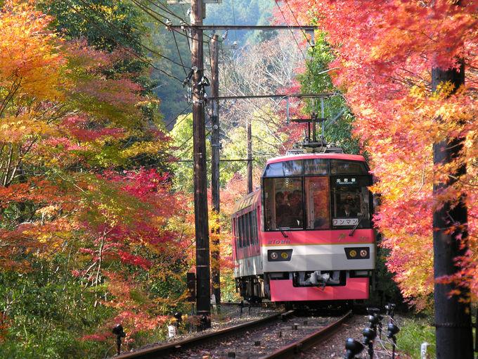 叡山電車の絶景紅葉車窓「もみじのトンネル」