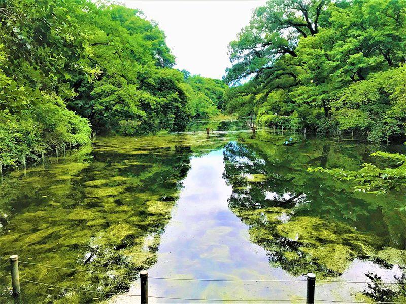 井の頭公園はホントにモネの池?噂の真実をめぐる散策ガイド