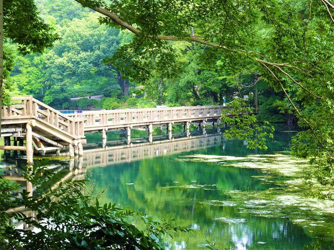 6.井の頭公園/武蔵野市・三鷹市