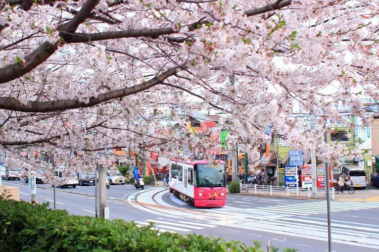 飛鳥山は江戸時代からの桜の名所
