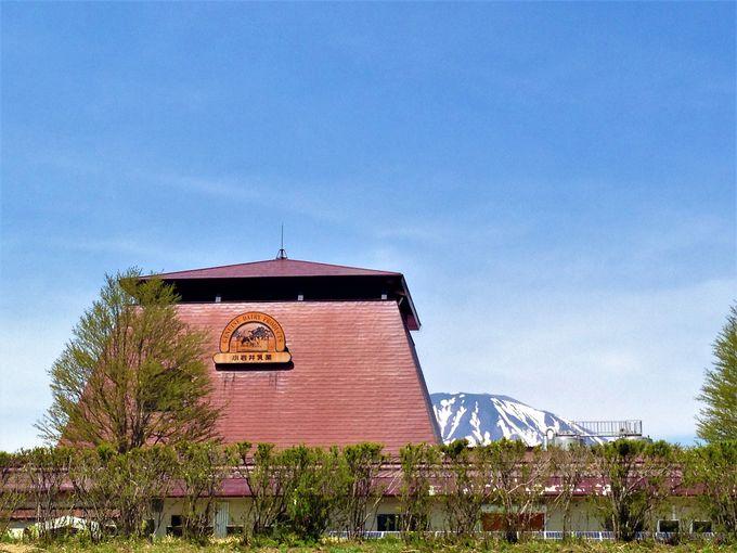 第4幕、小岩井乳業でのおいしい体験も楽しもう。