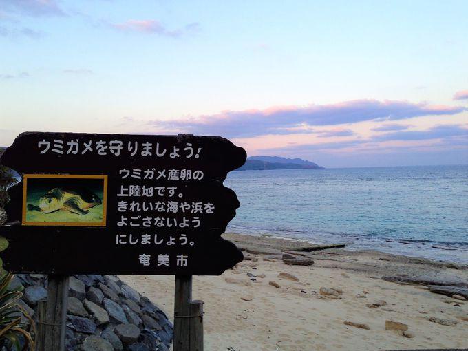 奄美大島観光ドライブは、東西半分ずつ2日間で。