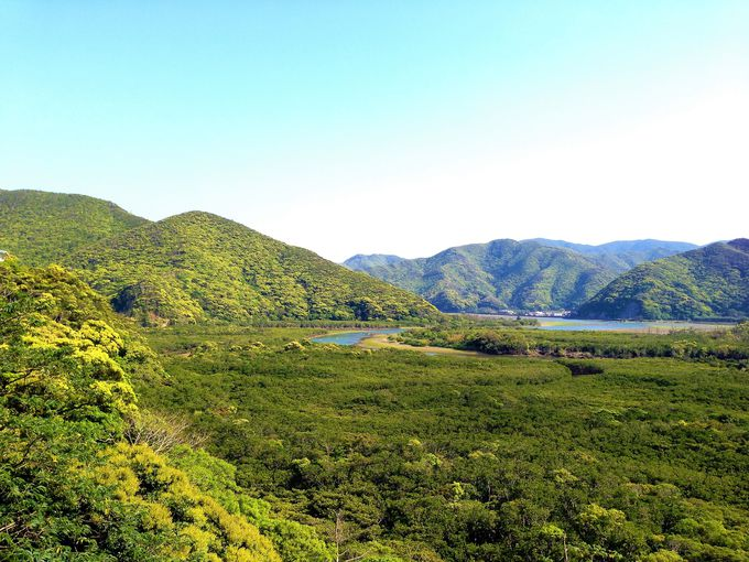 奄美大島は国道も絶景?マングローブ原生林は想像以上の緑