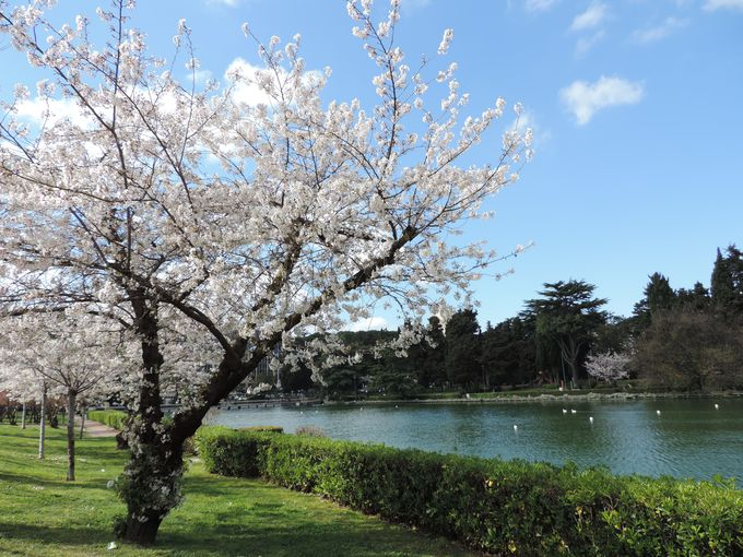 桜の散歩道があるエウル地区(E.U.R.)とは?