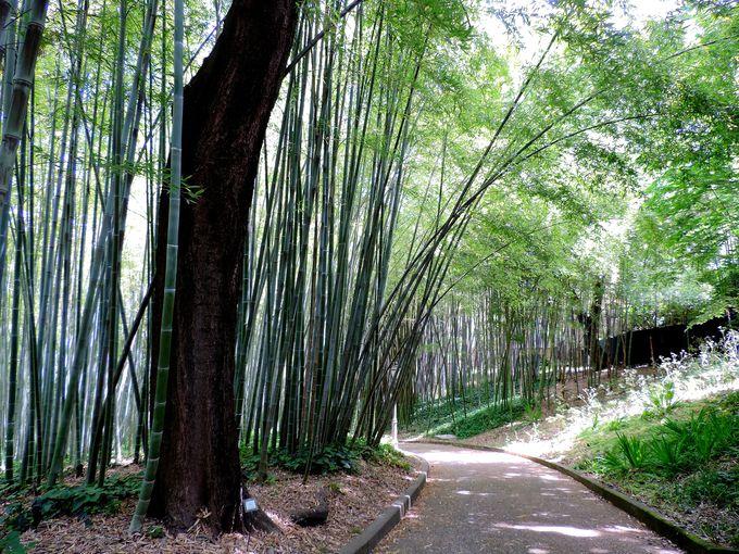 ヨーロッパでも有数の竹のコレクション
