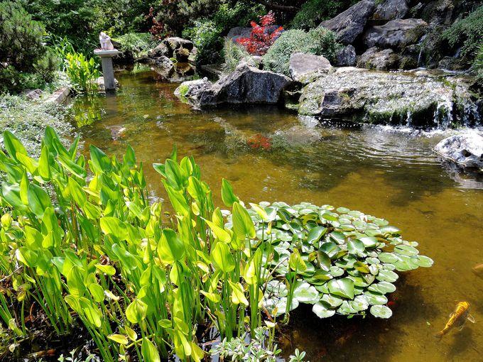 目玉の一つでもある、日本庭園