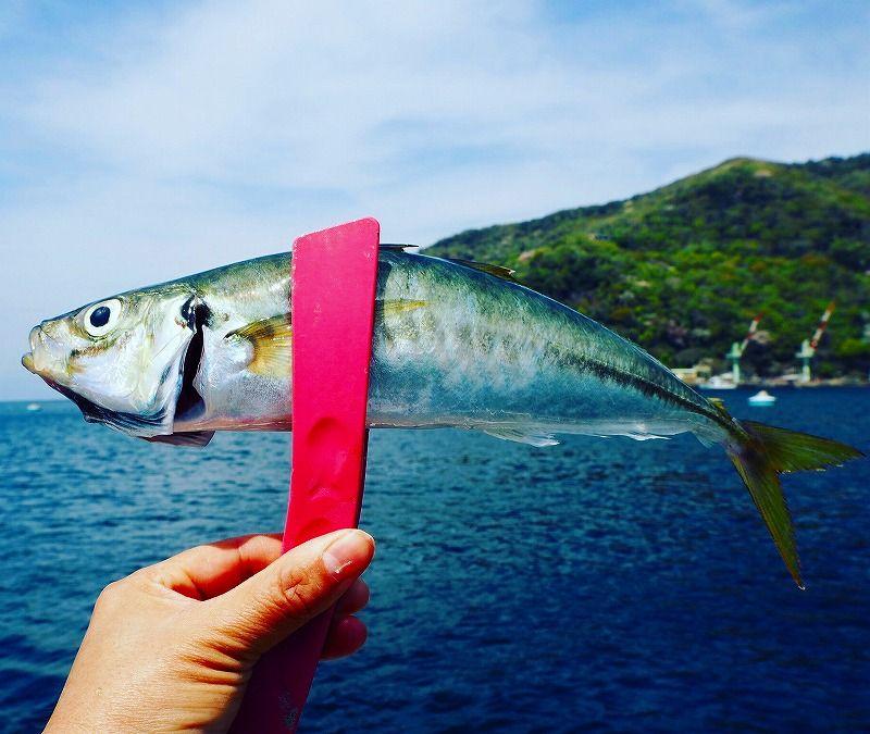 「係留船 ちどり丸」ではどんな魚が釣れるのか?