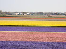 チューリップにミッフィー オランダの「インスタ映えスポット」12選
