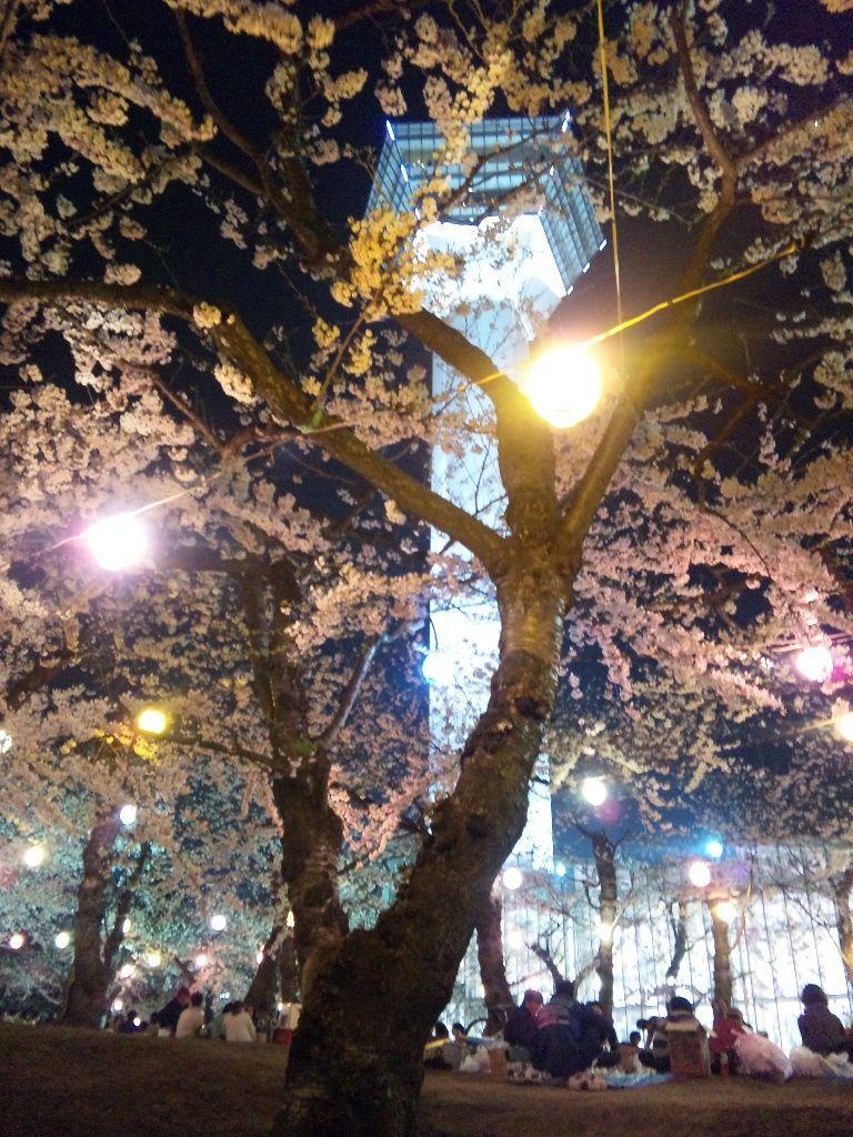 夜桜の下、手ぶらジンギスカンを楽しもう!