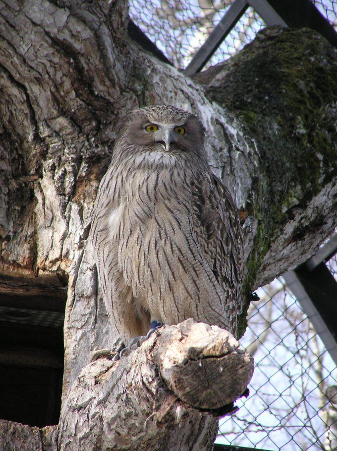 9.釧路市動物園