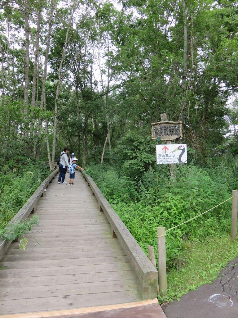 湿原の中の木道を歩いてタンチョウヅルに会いにいこう