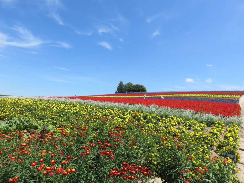 まるで絵本の中の世界!フォトジェニックな花畑