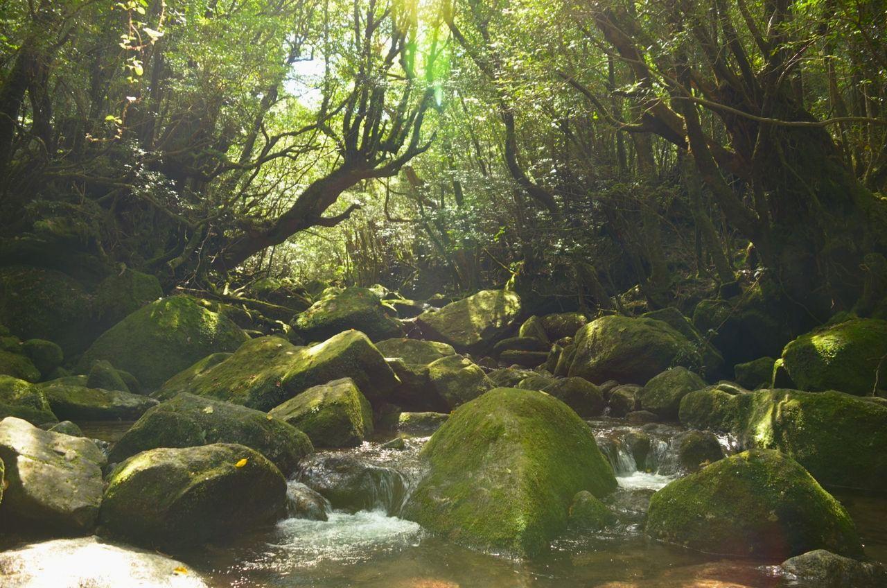 世界遺産「屋久島」を2泊3日で!王道の観光モデルコース