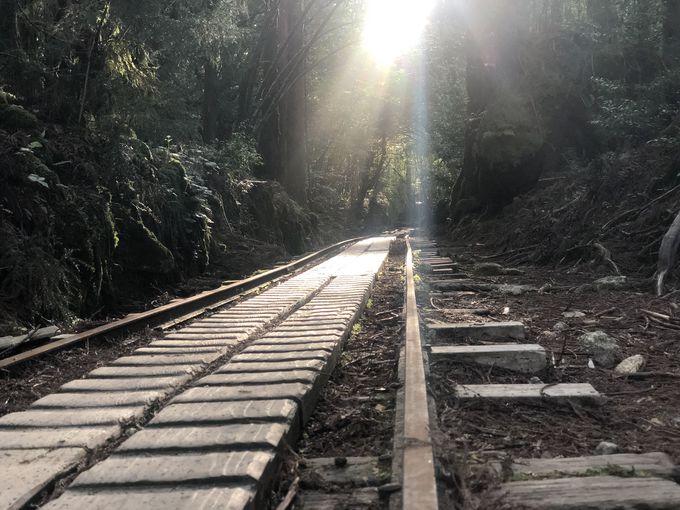2日目、森の王者・縄文杉に会いに行く