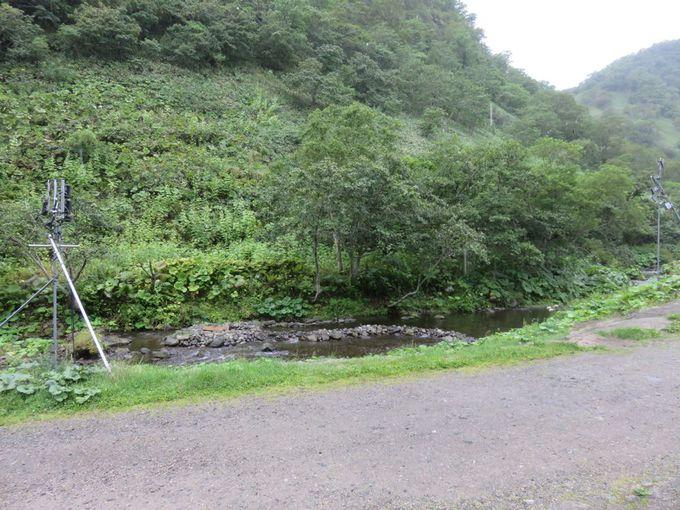食堂と観察小屋、給餌池について
