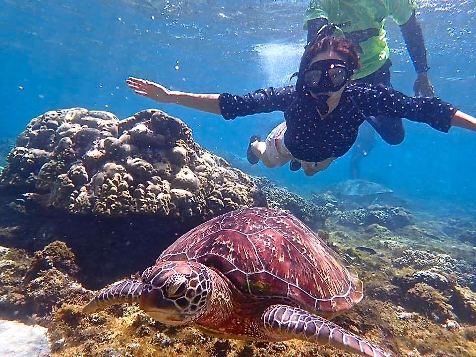 ウミガメと一緒に泳ごう