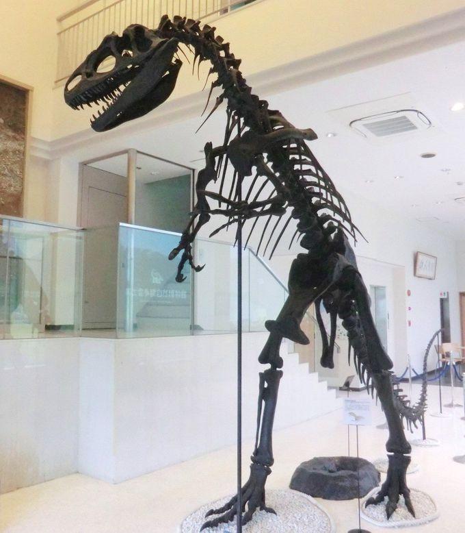 ロビーではいきなり肉食恐竜がお出迎え!