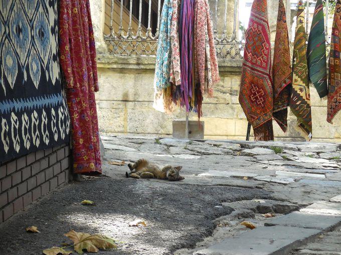 路地裏で猫さんぽ