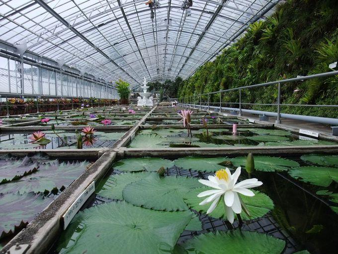 熱川の温泉熱が生んだ観光スポット「熱川バナナワニ園」