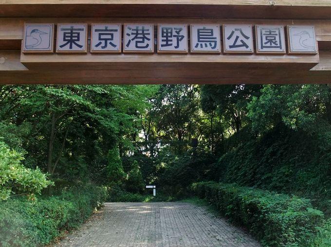 自然がいっぱいの「東京港野鳥公園」