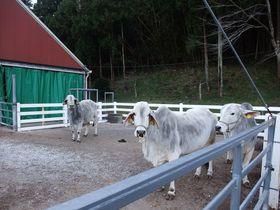 発祥の地は千葉だった!南房総市「酪農のさと」を散策。