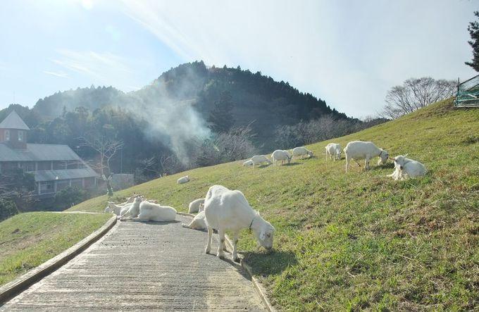 ヤギの群れとのんびり