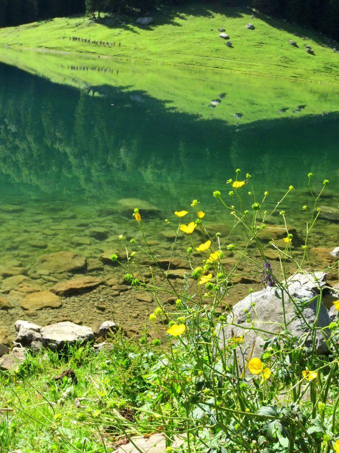 湖の奥に散策に行こう