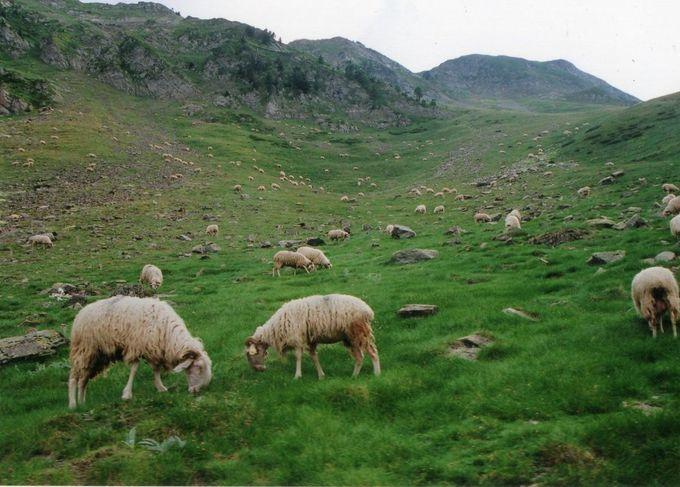 ピレネーの大自然に抱かれて走るトロッコ列車