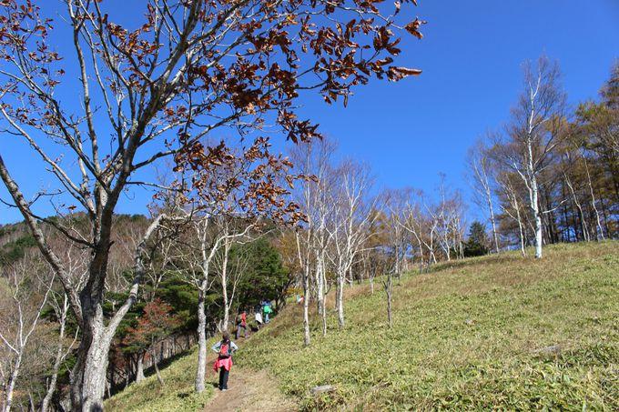坂が苦手な人は「中禅寺湖展望台」へ