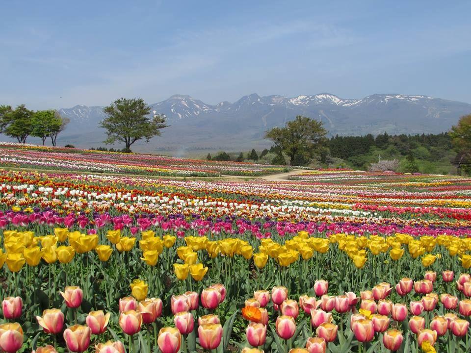 山々と花々に抱かれて、心も体もリフレッシュ!