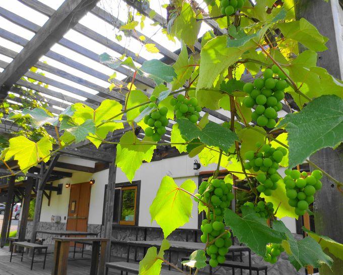 緑に包まれる幸せ!広い庭とテラスで寛ぎのひと時を!