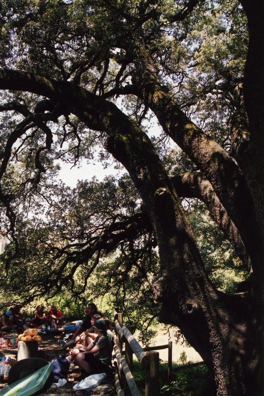 レスィーナ村の樹齢1000年の聖なる木・オーク!