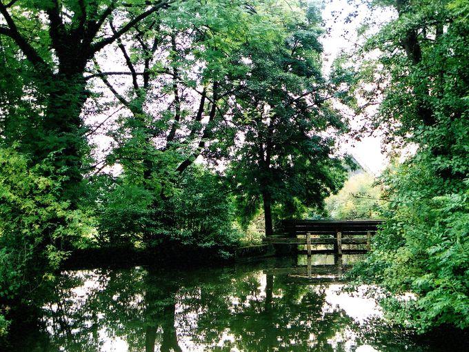 緑を水面に映す美しい水辺散策!