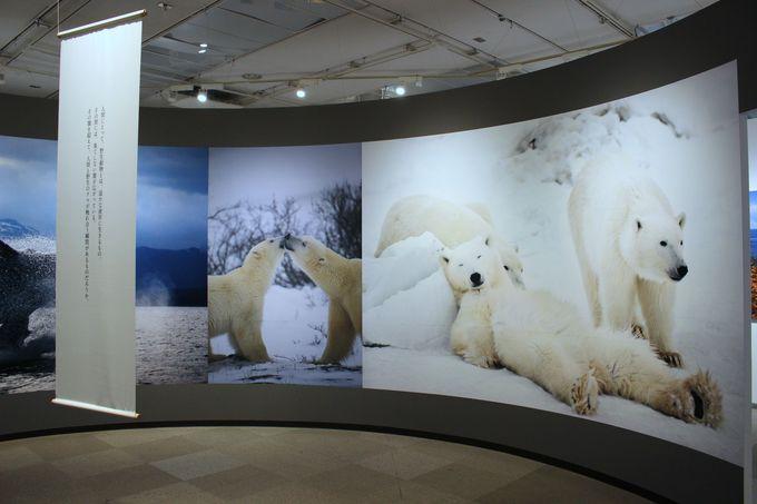 <生命のつながり>アラスカの自然、動物、そして人々の日々の営み・・・。