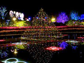 あしかがフラワーパーク「光の花の庭」イルミネーション3年連続全国1位の魅力とは