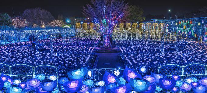 日本夜景遺産「あしかがフラワーパーク」日本三大イルミネーション認定のイルミが圧巻!