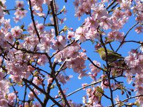 上野お花見ステイは「センチュリオンレディースホステル上野公園」が快適お得!