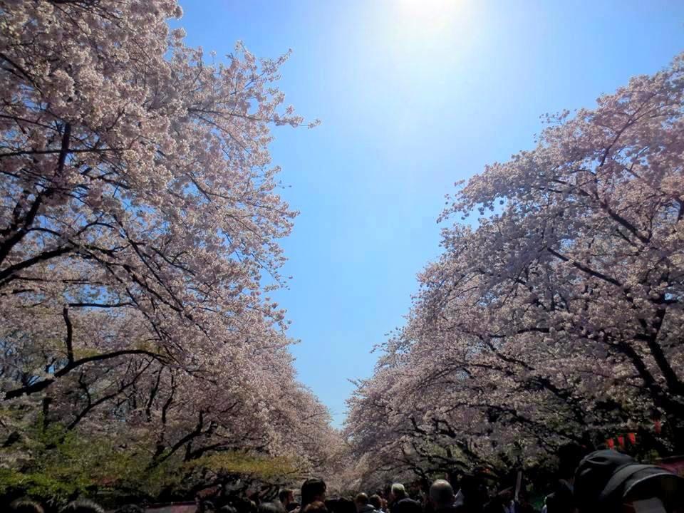 待ち時間は桜散策を楽しもう!平日ディナーは予約もOK!