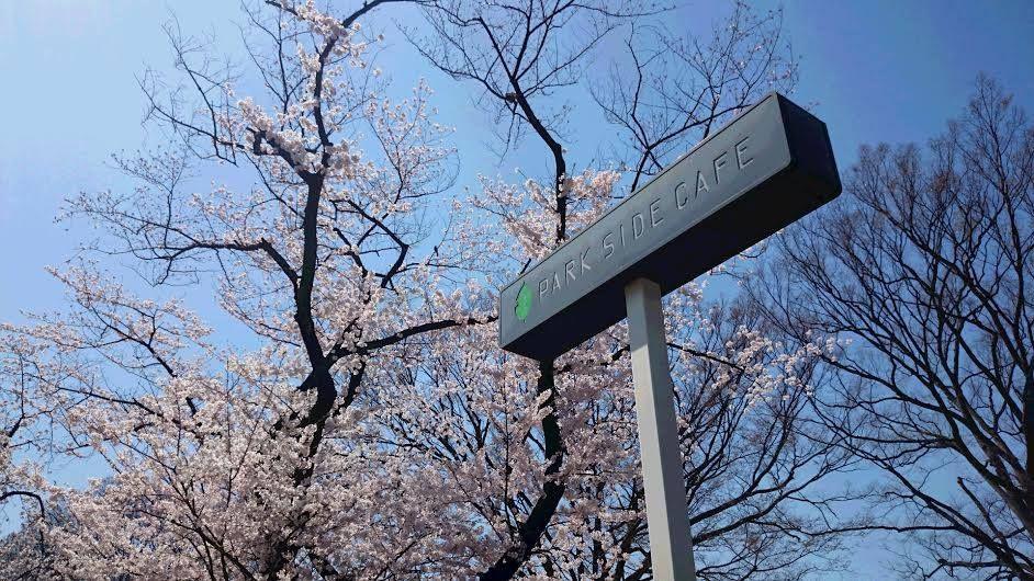 東京「上野の森パークサイドカフェ」お花見ランチの特等席!