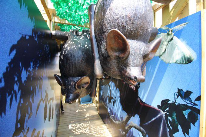 森の生態系のITADAKIにある動物は・・・