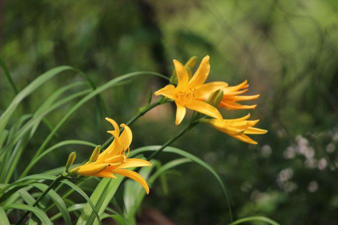 日光に咲く花々を楽しもう!
