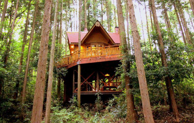 憧れのツリーハウス!カップルや女子旅にもオススメ
