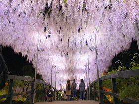 春・GWに行きたい!人気日帰りバスツアーランキングTOP15【東京発ほか関東・首都圏編】