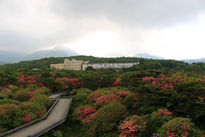 「八幡つつじ群落」へは八幡温泉からのアクセス。