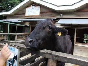 那須「千本松牧場」可愛い動物たち&気球や温泉も!一日中遊べちゃうその魅力とは