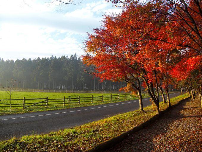 125年の歴史を歩む「那須 千本松牧場」
