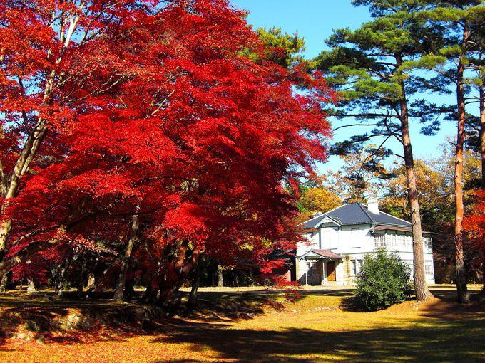春の桜・秋の紅葉の名所としても人気