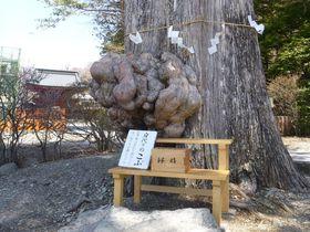 「日光山中禅寺」奇蹟の立木観音と絶景パワースポット巡り